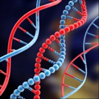 01-DNA
